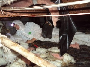 """WATER RESTORATION TECH, AUSTEN, UNDERNEATH THE CRAWLSPACE TO INSPECT FOR DAMAGES FROM THE WATER LEAK"""
